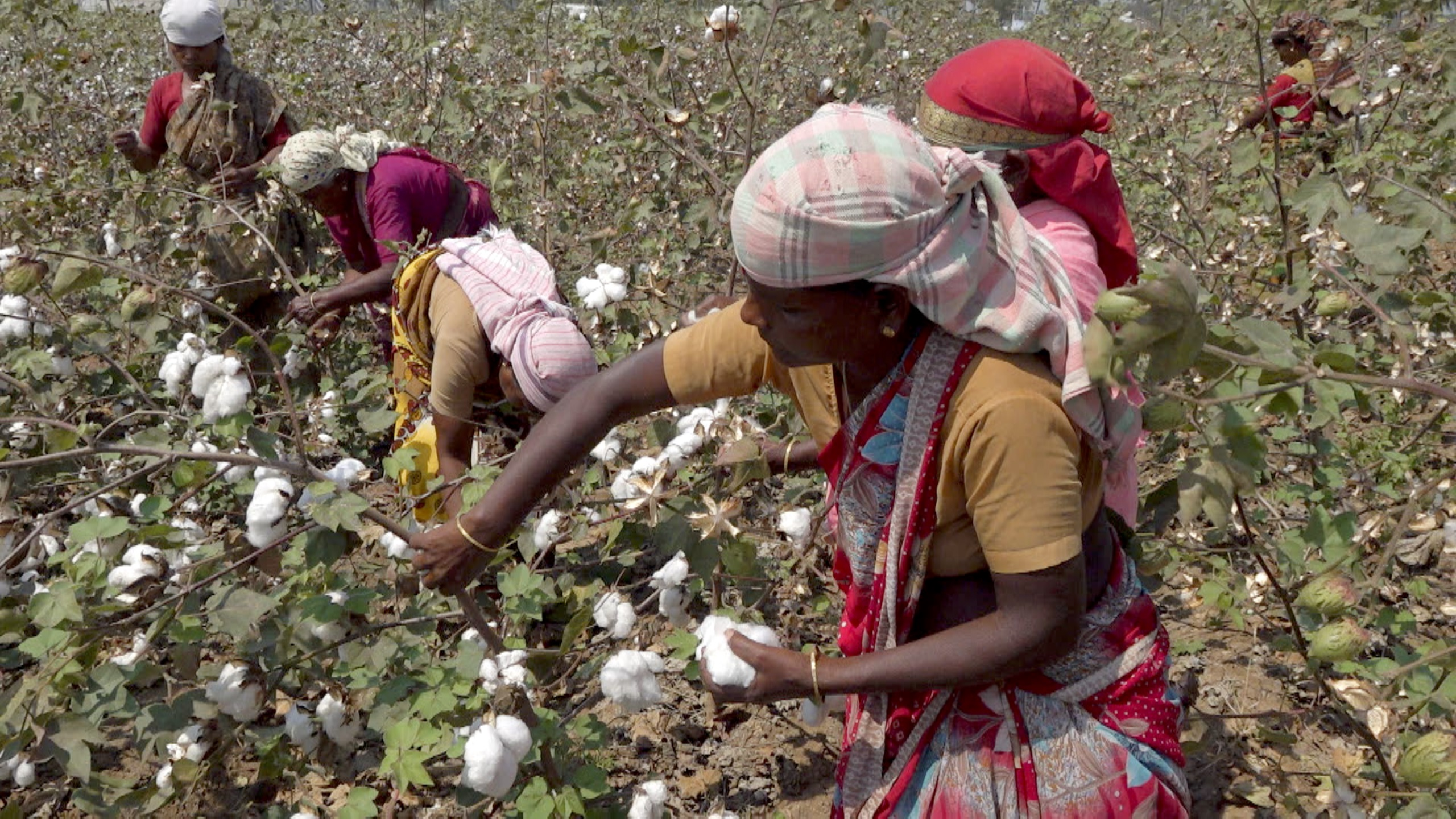 Cotton Harvesting Robot